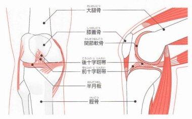 ひざ痛2.jpg