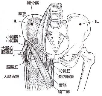 大腿の筋肉詳細.jpg