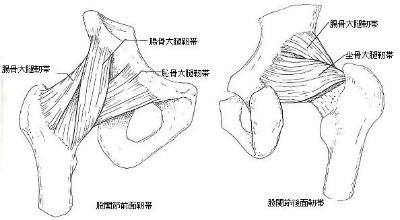 大腿靱帯2.jpg